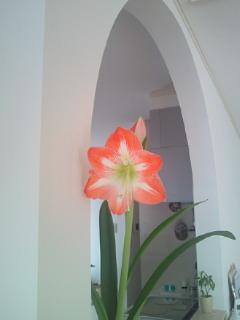 開花、そして…